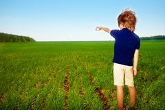 Small boy in field Stock Image