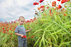 Small boy in field with red poppies Royalty Free Stock Photo
