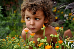 Small boy in flowers Royalty Free Stock Image