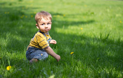 Small boy on the grass with dandelions Royalty Free Stock Photography