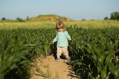 Small boy in green field of corn or maize Stock Photography