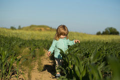 Small boy in green field of corn or maize Royalty Free Stock Photo