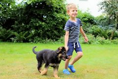 Small boy leading the young german shephard. By the wooden stick Royalty Free Stock Images