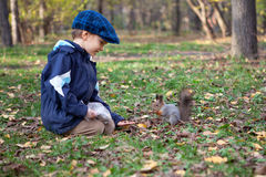 Small boy  and little squirrel in autumn park Stock Photo