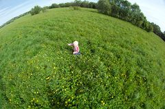 Small boy on meadow Stock Photography