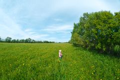 Small boy on meadow Stock Images
