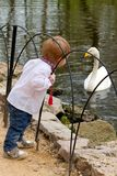 Small boy met the swan Stock Image