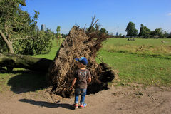 Small boy near fallen tree blown over by heavy winds Royalty Free Stock Images