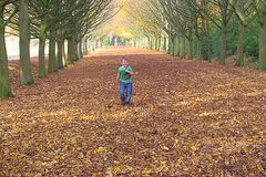 So many trees, so many leaves as far as the eye can see Cambridge October 2015 stock photo