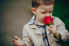 Small boy with red rose Stock Image