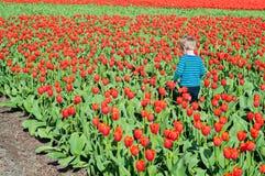 Small boy running on tulips field Stock Photo