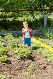 Small boy tasting the fresh vegetables Royalty Free Stock Photos