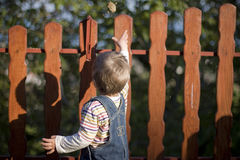Small boy and wood fence Stock Photography