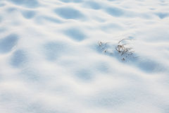 Small branch appears above the snow Royalty Free Stock Images