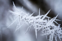 Small branch covered with hoarfrost Royalty Free Stock Photos
