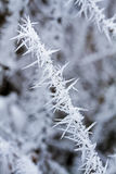 Small branch covered with hoarfrost Royalty Free Stock Photography