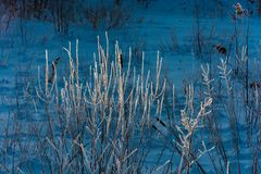 Branches of a bush covered with hoarfrost. Stock Images