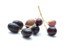 Small branches with ripening olives Stock Photography