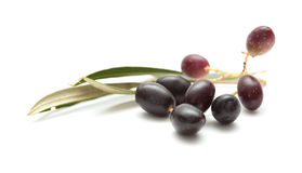 Small branches with ripening olives Stock Images