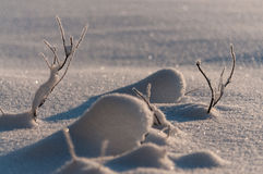Small branches snow covered in Sweden. During a strong winter Stock Photo