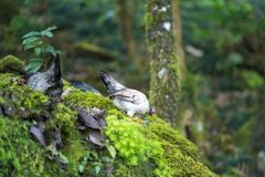 Small bread of fowl on mossy rock in wood.  Stock Photo