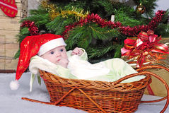 Small breast child in basket near new year's fir tree Stock Photo