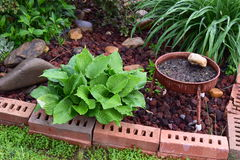 Small Brick Garden. With a hosta, grass, bush, and a grass plant stock images