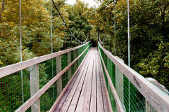 A small bridge. In a forest Stock Images