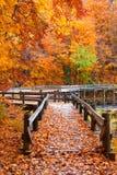 Small bridge through autumn trees Stock Photos