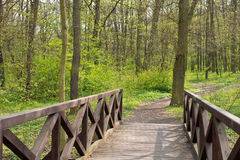 Small bridge in the forest Stock Photos