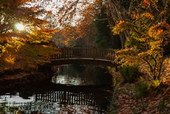 Small bridge in the forest royalty free stock image