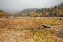 Small bridge long a path in the meadow at fall Royalty Free Stock Images