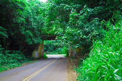 Small bridge overpass in Kauai Hawaii. With heavy vegetation growing over it. Taken in Kauai Hawaii Stock Images