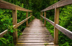 Small bridge on a trail in Codorus State Park Royalty Free Stock Photography
