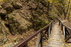 Small bridge in the woods Royalty Free Stock Images