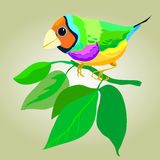 Small bright bird. Small bright colorful bird vector illustration Royalty Free Stock Image