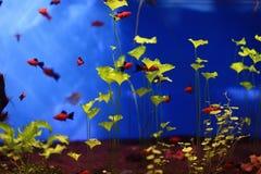 Small bright fish Stock Photos