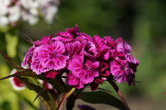 Small bright flowers. Bloom on a sunny day in summer stock images