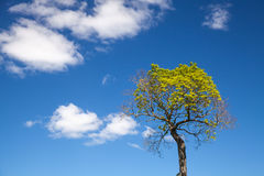 Small bright green tree with blue sky Royalty Free Stock Photography