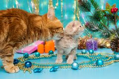 Small British kitten and adult cat Royalty Free Stock Photos