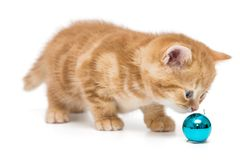Small British Kitten And Christmas Toy Royalty Free Stock Photo