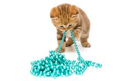 Small kitten  and Christmas decorations Royalty Free Stock Photos