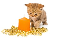 Small  kitten  and Christmas decorations Stock Image