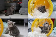 Small kitten among white feathers, screen split in four parts Stock Photo