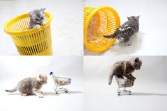 Small kitten among white feathers, multicam, grid 2x2 screen Stock Images