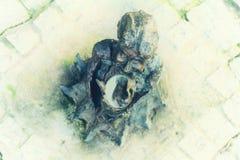 The small bronze statue gnome by name - Marysia Pieknisia, gnome girl with mirror