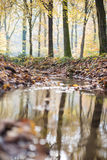 Small brook in autumnal forest Royalty Free Stock Image