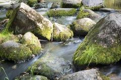 Small brook Stock Photos
