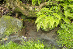Small brook and plants Stock Image