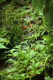 Small Brook with Plants Stock Images